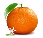 Orange mit Blüte und Blättern Stockfoto