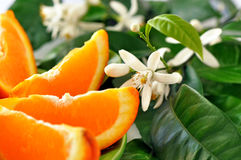 Orange mit Blättern und Blüte Stockfotografie