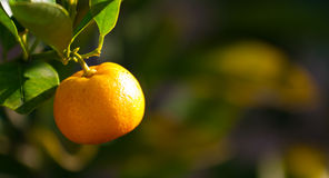 Orange mit grünem Hintergrund Stockbild