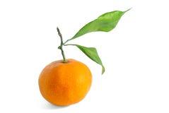 Orange mit Zweig Lizenzfreie Stockfotografie