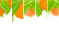 Orange mix Stock Photography