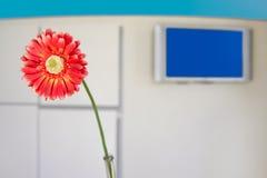 orange moderne de bureau d'entrée de gerbera de fleur Images stock