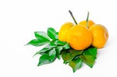 orange moget för frukt Royaltyfria Foton