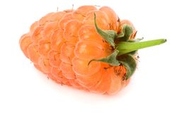 orange mogna hallon som isoleras på den vita bakgrundsmakroen Arkivfoton