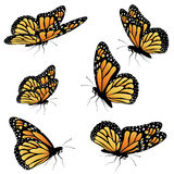 Orange Monarch Butterfly Royalty Free Stock Photos
