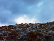 Orange moss & the sky Stock Image