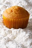 Orange muffin closeup in powdered sugar. vertical Stock Image
