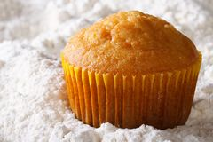 Orange muffin macro in powdered sugar. horizontal Stock Photos