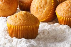 Orange muffins closeup in powdered sugar. horizontal Stock Image