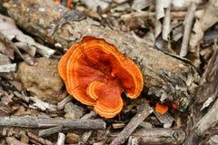 Orange Mushroom Stock Photography