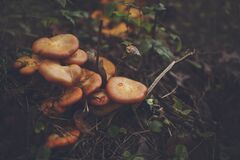 Orange Mushroom on Black Soil Royalty Free Stock Images