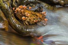 Orange mushroom with waterfalls Royalty Free Stock Photos