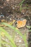 The orange mushrooms grow. Stock Image