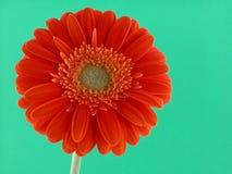 orange nätt Arkivfoton