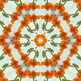 Orange Nasturtium Kaleidoscope Stock Images