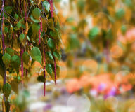 Orange naturbakgrund Royaltyfri Foto