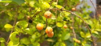 Orange naturelle de fleur de photo photo libre de droits