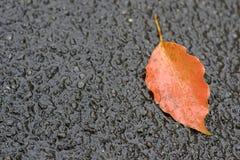 Orange nedgång för blad på jordning i höst Arkivfoton