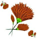 Orange Nelke Stockbild