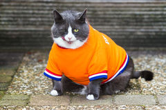 Orange is the new fat. Random image of a fat cat dressed as soccer player for the dutch national team exercising in the garden in spring in the Netherlands royalty free stock image