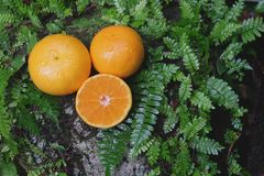 Orange ny frukt på en sten med ormbunkebladet Arkivbilder