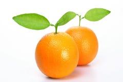 orange nya frukter Arkivfoto