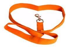 Orange Nylonhundeführung Lizenzfreie Stockbilder