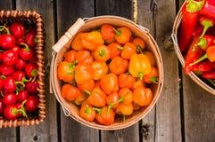 Orange och glödheta peppar i korgar Arkivbild
