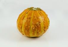 Orange och gropig kalebass som används för dekor eller matlagning Fotografering för Bildbyråer