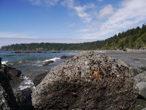 Orange och purpurfärgad sjöstjärna på stenblocket Arkivfoton