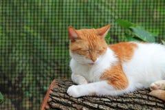 Orange och vit katt som sover på journal royaltyfri bild