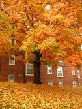 Orange October Royalty Free Stock Photography