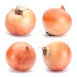 Orange onion vegetable Stock Photo