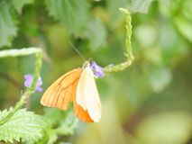 Orange. The orange butterfly Stock Photos