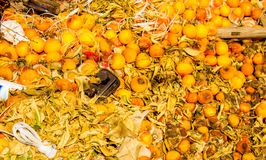 orange orchid arkivfoto