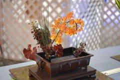Orange orchid arrangement. Stock Image
