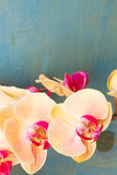Orange  orchid branch Royalty Free Stock Image