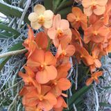 Orange orchid. In Kew Gardens Stock Photos