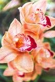 Orange Orchidee blüht auf Baumstumpf-Beschaffenheitshintergrund Stockfotografie