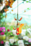 Orange Orchideenblumennahaufnahme Stockbilder