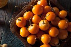 Orange Organic Cape Gooseberries Royalty Free Stock Photography
