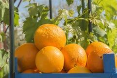 Orange. Organic oranges,wooden box with oranges Stock Photography
