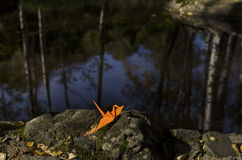 Orange origami crane and water reflections Royalty Free Stock Photos