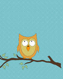 Orange owl on tree branch Stock Photo