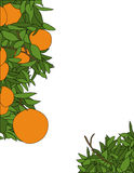 Orange Page Design. An orange plant page border design royalty free illustration
