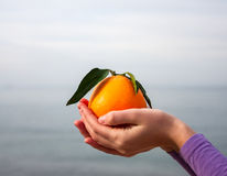Orange in palm of hand Royalty Free Stock Photo