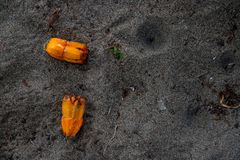 Orange palm seeds on grey sand. Tropical tree reproduction concept. Seed on ground. Pandanus palm seed. Exotic plant vegetation. Tropical garden land. Seaside royalty free stock image