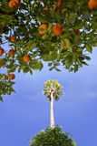 Orange and Palm Tree Royalty Free Stock Photo