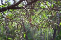 Orange papegoja Arkivfoton