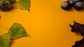 A orange paper background with leaves and chestnuts autumn style stock photos